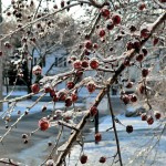Nature Trims The Tree For Christmas