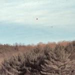 Cherry Plain Balloon Test