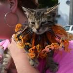 A Perfect Pumpkinpalooza Day