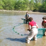 Great Hudson Estuary Fish Count  Seine Net Fishing At Schodack Island