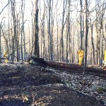 The Careless Toss Of A Cigarette May Be The Cause Of A Large Fire In The Woods Along The Grafton-Pittstown Line