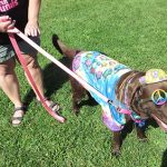 Grafton Lakes State Park Goes To The Dogs,  At Least For One Day, At Bark And Brew Festival