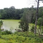 DOH Issues Catch And Release Advisory For Thayer's Pond – Locals Say It's About Time